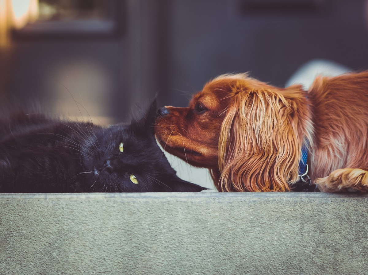 chien-chat